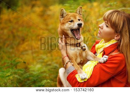 Girl and dog Shiba Inu in autumn park. Pet yawns. Pedigree dog. Funny animals and their owners. Riot of colors of nature. Outdoor Activities.