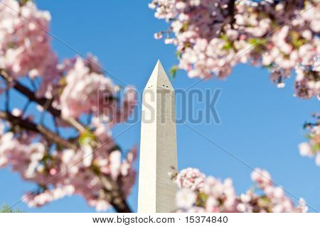 Washington Monument Pink Cherry Blossoms, Dc, Usa