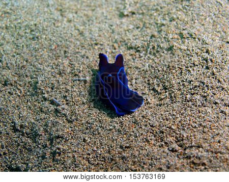 The surprising underwater world of the Bali basin, Island Bali, Puri Jati, true sea slug