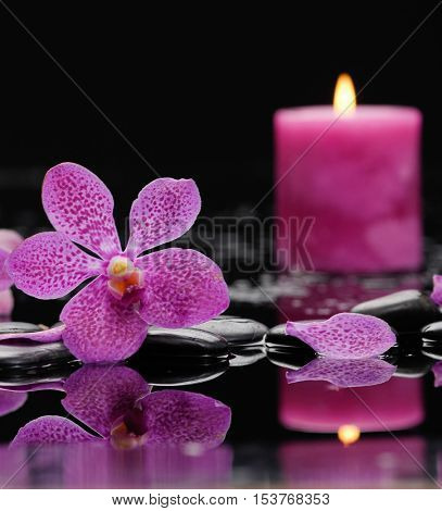 Still life with Pink orchid ,candle with therapy stones