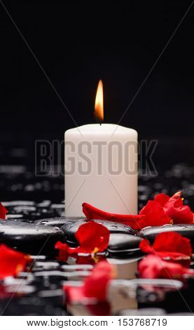 Many rose petals with white candle and therapy stones