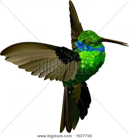 Humming-Bird.Eps