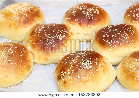 Freshly made sesame seed topped burger buns, fresh from the oven and still joined together on the baking tray