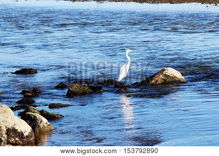 A crane standing on the rocks looking over the blue water of Peconic Bay