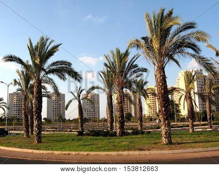Palms in quarter Neve Rabin in Or Yehuda Israel September 6 2009