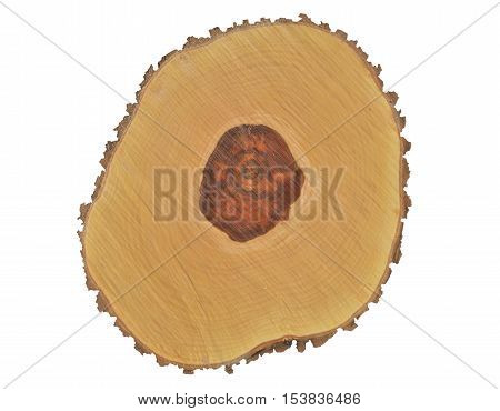 A close up of the cut of an old plum-tree. Isolated on white.