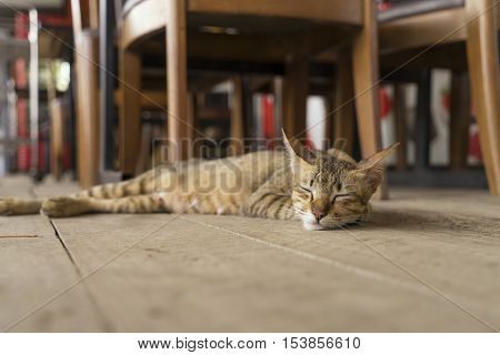 cat sleep on the wood floor at home - can use to display or montage on product