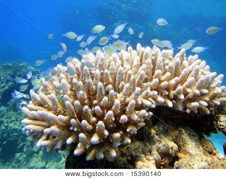Beatiful Fishes On Coral