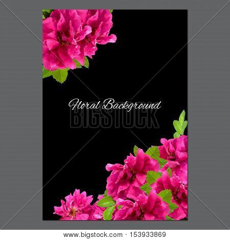 background texture made of photo manipulation oil paint pink petals briar fresh delicate flowers terry rosehips and place for text