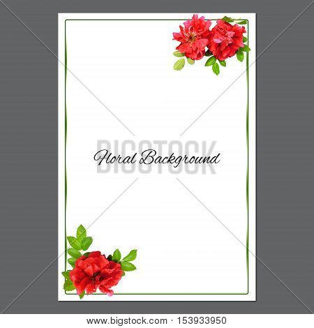 background texture made of photo manipulation oil paint red petals briar fresh delicate flowers terry rosehips and place for text