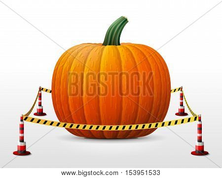Pumpkin fruit located in restricted area. Winter squash surrounded barrier tape. Vector illustration about agriculture vegetables cooking halloween gastronomy thanksgiving olericulture etc
