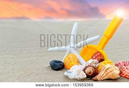 Mixing Shellfishes on the beach photo with outdoor sunset in cloudy warm and low lighting.