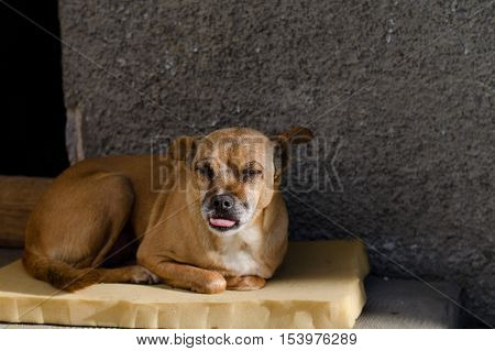 mongrel sitting. Man's best friend in the world