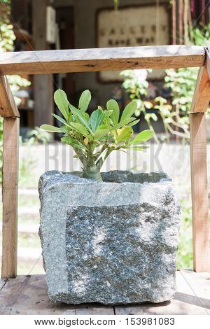 Green plant in stone pot with sunshine, stock photo
