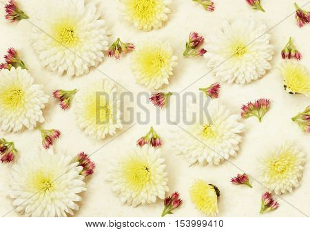 Old vintage paper with white asters and small pink flowers for background. Flat lay. Top view.