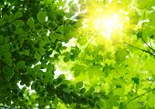 stock photo of sun rays  - Green leaves with sun ray - JPG