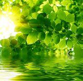 Постер, плакат: Зеленые листья отражающие в воде