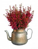 image of potted plants  - Bunch of heather in vintage metal pot - JPG