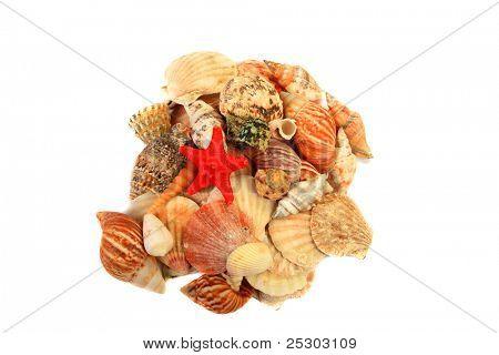 Various Sea Shells isolatd on white