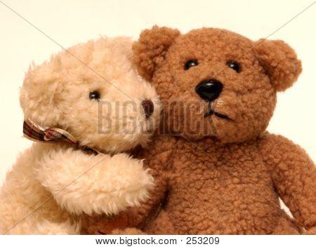 Bears53
