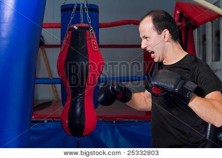 Fanatic Boxer