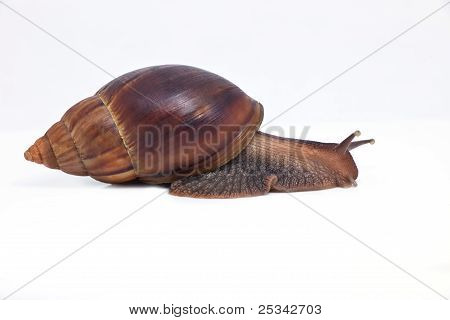 grape snail fast movement forward