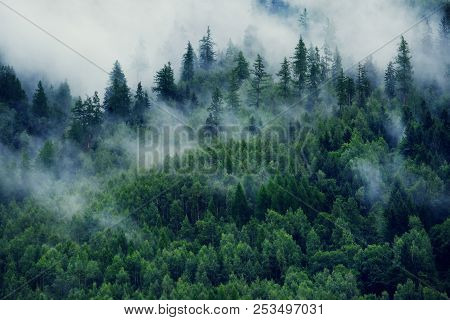 poster of Misty Landscape With Fir Forest. Morning Fog In The Mountains. Beautiful Landscape With Mountain Vie
