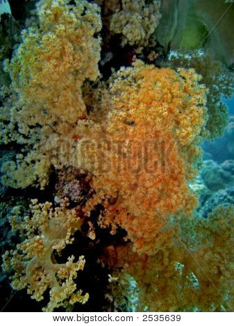 Gorgonian Forest