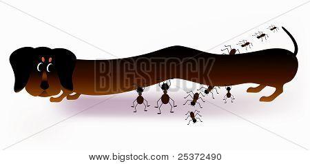 Dachshund and ants cartoon