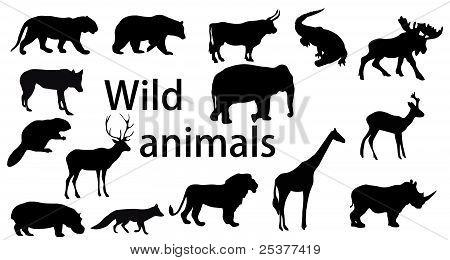 Vector Set: Wild Animals