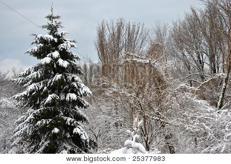 Winter Scene Snow Covered Tree