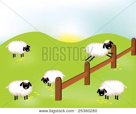 Sheeps in the field