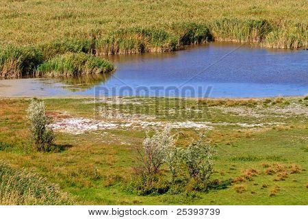 Reed Belt Landscape In National Park