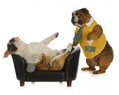 dog psychology - bulldog standing looking at another laying on a couch with reflection on white back