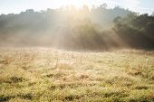 Summer Sunny Morning At The Meadow. Nature Woods And Meadow Sunlight Beauty World Background. poster
