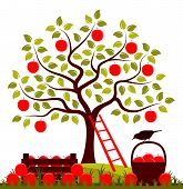 Vector Apple Tree, Wooden Crate Of Apples And Basket Of Apples Isolated On White Background poster