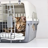 Young Beautiful Kitty In The Transport Cage. poster