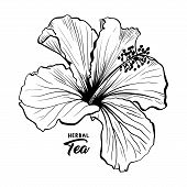Hawaiian Hibiscus Fragrance Flower Or Mallow Chenese Rose. Black And White Flora And Isolated Botany poster
