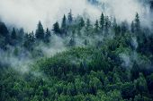Misty Landscape With Fir Forest. Morning Fog In The Mountains. Beautiful Landscape With Mountain Vie poster