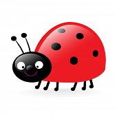 little smiling ladybug vector illustration isolated on white