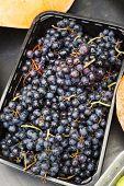Fresh Ripe Grape With Drops. Macro. Food Background. Dark Grape. Blue Grape. Wine Grape. poster
