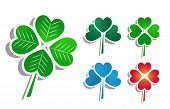 picture of four leaf clover  - Vector illustration with isolated clover leafs over white - JPG
