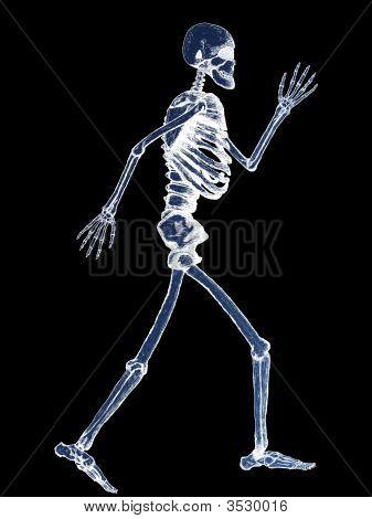 X-Ray der vollständige Skelett Abbildung auf schwarzem Hintergrund