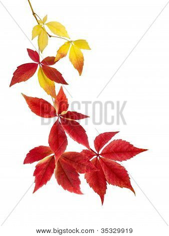 Beautiful Arrangement Of Autumn Leaves
