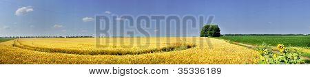 Field Full Of Golden Wheat Seed.