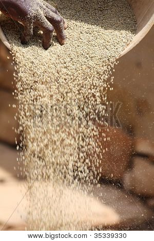 A Dogon woman sorts her grain harvest