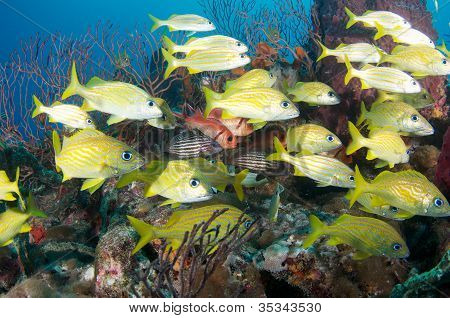 Fish on the Reef