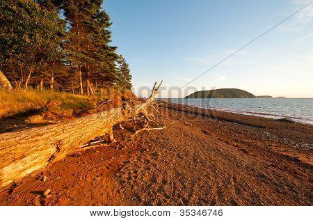 Coastal Log At Sunset