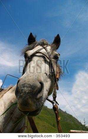 Horse Portrait-01