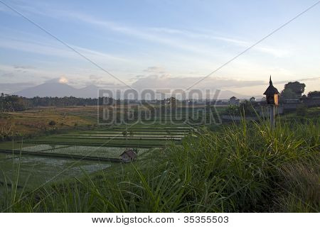 Ricefields of Bali